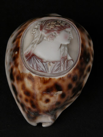 Shell carving