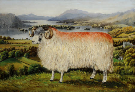 Swaledale Ram from Troutbeck, looking south down Lake Windemere