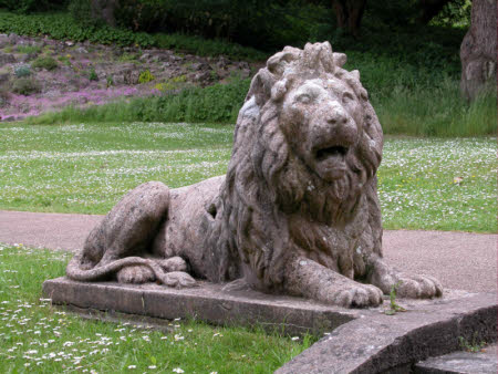 A Recumbent Lion